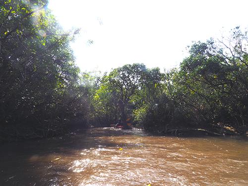 マングローブの流れ
