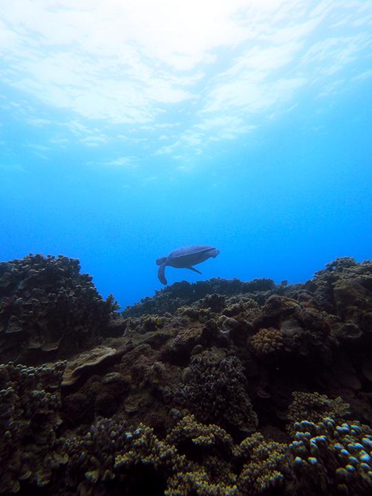 奄美大島 体験ダイビング中 カメ