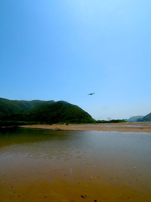 奄美 マングローブ干潟
