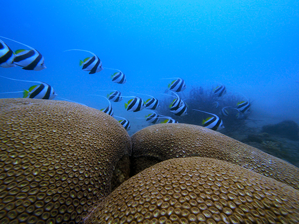 大島海峡体験ダイビング